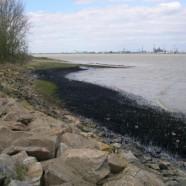 Marée noire en Loire