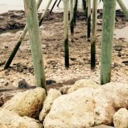 Alerte aux carrelets toxiques en Charente-Maritime
