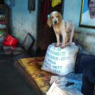 (Français) Déchets post-catastrophe: les inondations d'août 2018 au Kerala (Inde)