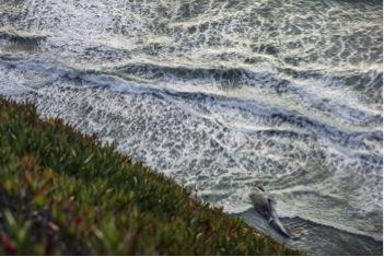 baleine-bleue-californie-Robindesbois