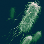 """(Français) """"Coli Bag"""" : les E. coli et les salmonelles sont-ils des espèces protégées ?"""