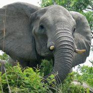 Prenez la défense des éléphants !